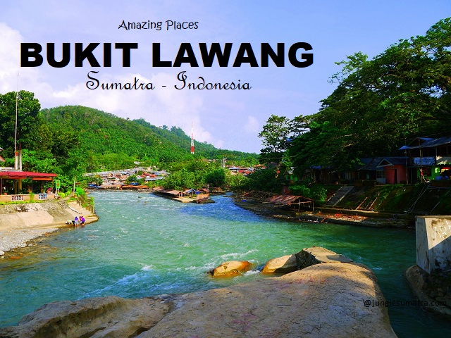 Image result for Bukit Lawang